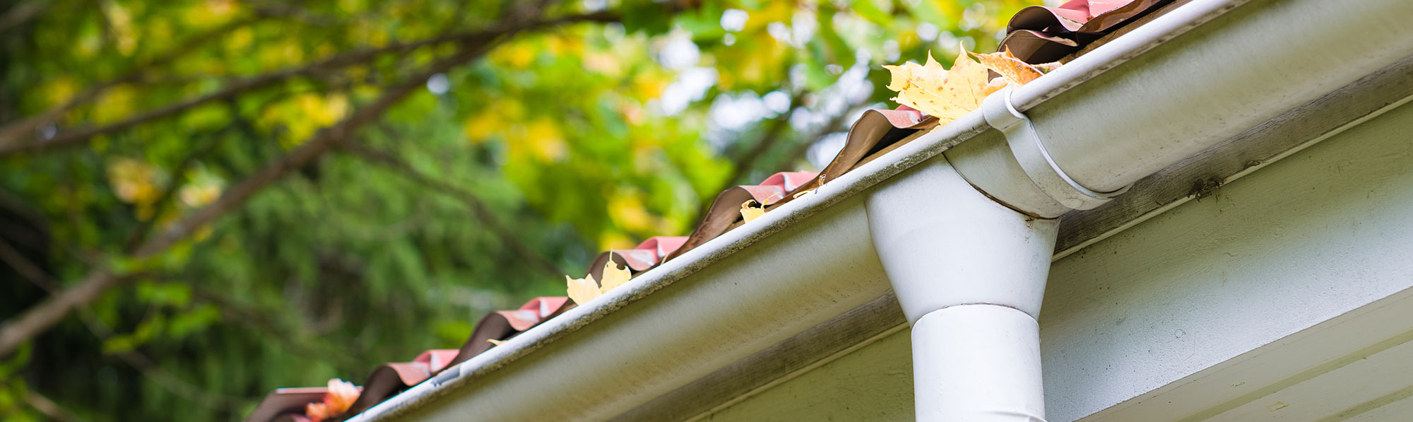 Leaves on a Gutter